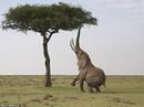 Động vật sống động tuyệt vời qua ống kính