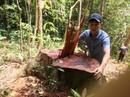 """Cận cảnh khu rừng gỗ quý ở Quảng Bình bị """"lâm tặc"""" chặt phá tan hoang"""