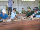 Đà Nẵng: Bắt giữ lô hàng nghi là ngà voi lên đến 9,1 tấn
