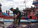Tàu cá Quảng Ngãi bị tàu Trung Quốc đâm chìm mới đóng, trả nợ chưa xong
