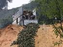 Thảm cảnh đổ bỏ cả xe tải dứa cho bò ăn