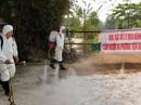 Xuất hiện ổ dịch tả heo Châu Phi đầu tiên ở miền Tây