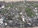 Cá chết trắng gây ô nhiễm tại Khe Cạn, người dân đóng cửa cả ngày lẫn đêm