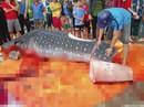 Thực hư việc ngư dân Sầm Sơn xẻ thịt cá voi nhám quý hiếm nặng gần 1 tấn