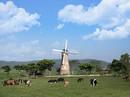 Đến năm 2020, Việt Nam có 405.000 con bò sữa