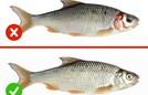 Dấu hiệu phân biệt cá tươi và cá ươn