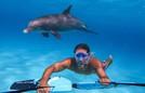 Loài cá heo thích chơi đùa, bơi lội cùng người lướt ván