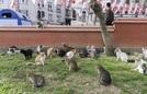 Hàng triệu con mèo lang thang trên đường phố