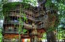 Bên trong ngôi nhà trên cây đồ sộ nhất thế giới trước khi bị thiêu rụi