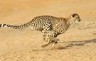 Bạn có biết 'ai' đi xa nhất trong 10 giây?