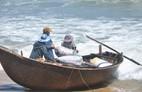 Quảng Ngãi: Ốc bé tẹo nhưng mang tiền triệu cho ngư dân