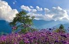 'Check in' đồi hoa tím, chụp những bức ảnh đẹp để đời