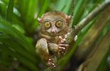 Loài thú trên cạn có đôi mắt lớn nhất