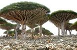 Khám phá những khu rừng đẹp nhất thế giới