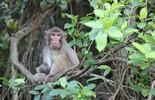"""Có một """"Hoa quả sơn"""" – Vương quốc của loài khỉ trên vịnh Hạ Long"""