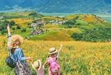 Chiêm ngưỡng xứ sở hoa kim châm đẹp như tranh vẽ ở Đài Loan