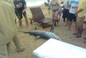 Nha Trang: Phát hiện cá mập dài 2m trôi dạt trên bãi biển