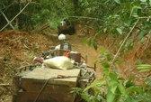 Để lâm tặc phá rừng, 5 cán bộ kiểm lâm bị kỷ luật