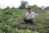 Tin đồn thất thiệt đóng cửa khẩu: Người trồng khoai lao đao!