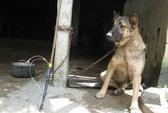 Đuổi theo bọn trộm chó, bị chém trọng thương