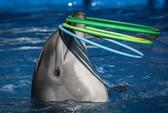 Long đong phận cá heo sát thủ Ukraine