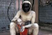 Ấn Độ: Đàn khỉ