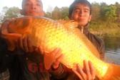 Câu được cá chép vàng gần 10 kg ở Biển Hồ