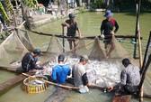 Đề nghị lùi thời điểm áp dụng nghị định về cá tra