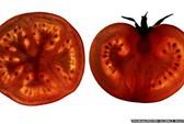 Viên cà chua giúp ngăn chặn bệnh tim