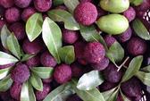 Cơn sốt trái cây rừng ở Hà Nội