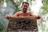 Nuôi ong kiếm tiền tỉ ở vùng Đồng Tháp Mười