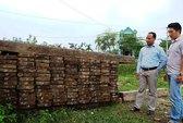 Cán bộ bảo vệ rừng tiếp tay cho lâm tặc