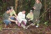 Tận diệt thú rừng
