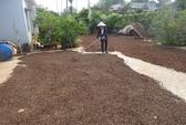 Biến đổi khí hậu ảnh hưởng đến cây cà phê