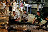 Bắt được cá kiếm nặng gần 318 kg