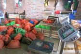 Nhồi bột gạo để tê tê tăng cân trước khi xuất sang Trung Quốc