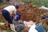 Thanh Hóa: Tiêu hủy hơn 2 tấn bì lợn bốc mùi hôi thối