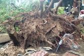 TP HCM: Cây ngã đè chết người mẹ, 2 con bị thương
