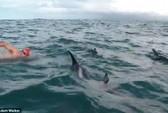 Đàn cá heo cứu vận động viên khỏi hàm cá mập