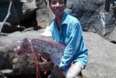 Dân Đà Nẵng câu được cá mái chèo dài 4,2 mét