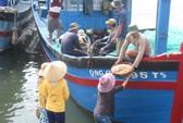 Trúng đậm ruốc, cá cơm, ngư dân có tiền triệu sau vài giờ