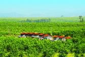 HAG tập trung vào nông nghiệp công nghệ cao