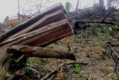 Phá rừng quốc gia, tấn công kiểm lâm bằng cưa
