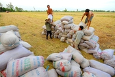 Lúa được mùa, được giá