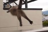 Cháy nhà, mèo nhảy lầu tự sát từ tầng 14