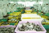 Hàn Quốc sẽ miễn thuế cho 15.000 tấn tôm Việt Nam