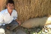 Đào đường trúng quả bom chưa nổ dài hơn 1,2 m