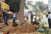 Đề nghị Thanh tra Chính phủ vào cuộc vụ chặt cây xanh Hà Nội