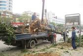 Chặt cây xanh, cần xử theo luật