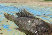 Ngư dân Nga bắt được cá đột biến kỳ lạ